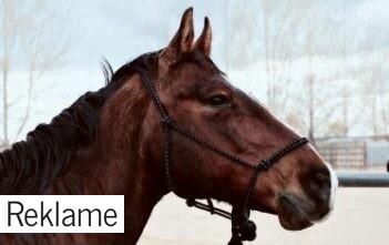 hestedyrlæge