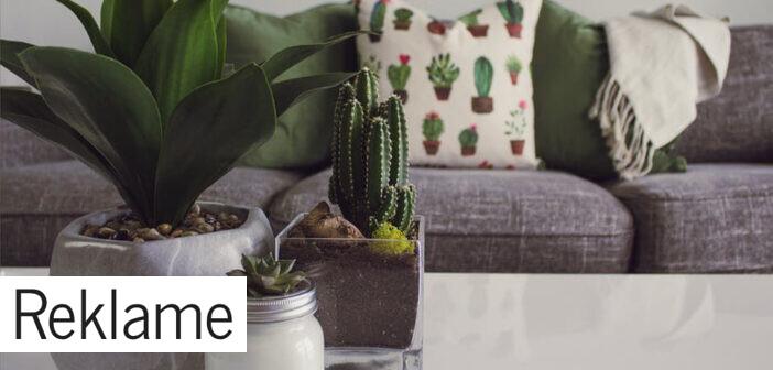 Boligtrend: Fyld dit hjem med grønne planter