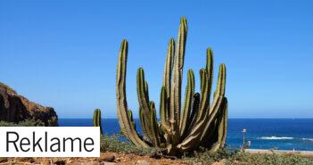 Bolig i udlandet – Tenerife