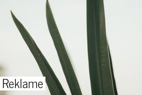 Skab liv i hjemmet med grønne planter – uden grønne fingre